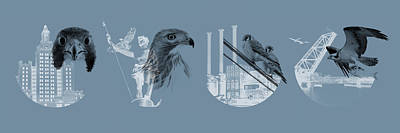 Red Tail Hawk Digital Art - Providence Raptors Landmark Collection - Panoramic by Peter Green