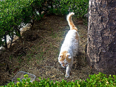 Le Cat Photograph - Prowling Cat In Le Recoleta Cemetery In Buenos Aires-argentina  by Ruth Hager