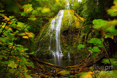 Photograph - Proxy Falls Oregon by Michael Cross