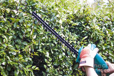 Pruning Machine Art Print by D R