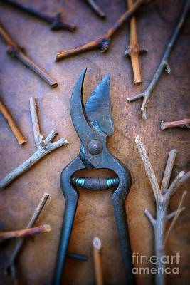 Pruning Scissors Art Print by Carlos Caetano