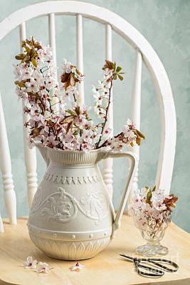 Cherry Blossoms Photograph - Prunus Spring Blossom by Amanda Elwell