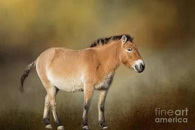 Photograph - Przewalski's Horse by Eva Lechner