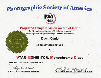 Photograph - P S A - P I D M One Star Exhibitor by Dawn Currie