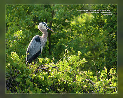 Photograph - Psalm 130 5 by Dawn Currie