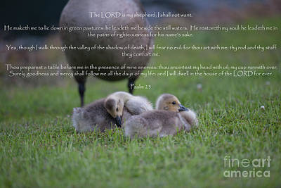 Photograph - Psalm 23 by Dale Powell