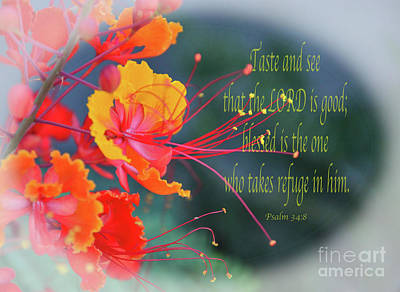 Photograph - Psalm 34 V 8 by Debby Pueschel