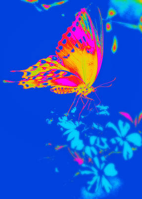 Photograph - Psychedelic Butterfly by Rose  Hill