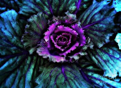 Psychedelic Cabbage Original