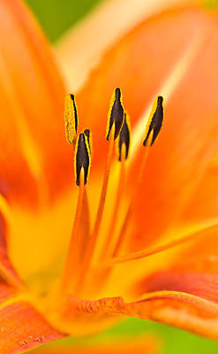Photograph - Psychedelic Daylily by  Onyonet  Photo Studios