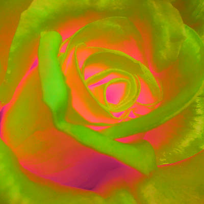 Photograph - Psychedelic Infusion  by Nathan Little