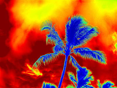 Photograph - Psychedelic Palms And Sky by Karen J Shine