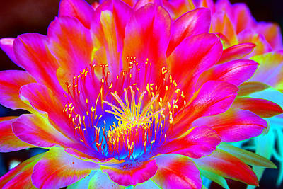 Royalty-Free and Rights-Managed Images - Psychedelic Pink Flower by Richard Henne