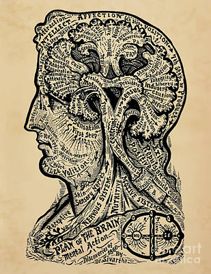 Human Brain Drawing - Psychology Plan Of The Brain by Safran Fine Art