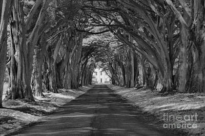 Photograph - Pt Reyes Cypress Tunnel Black And White by Adam Jewell