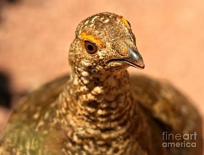 Photograph - Ptarmigan Bird Closeup by Adam Jewell