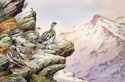 Mountain Snow Landscape Painting - Ptarmigan On The High Tops by Carl Donner