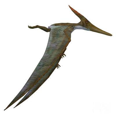 Pteranodon Reptile Side Profile Art Print