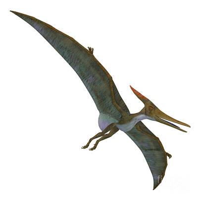 Pteranodon Reptile Soaring  Art Print