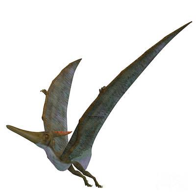 Pteranodon Reptile Wings Up Art Print