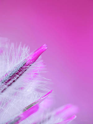 Unique Wall Art Photograph - Ptilotus Macro by Wim Lanclus