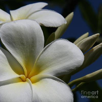 Flowers Of Spring Digital Art - Pua Lena Pua Lei Aloha Tropical Plumeria Maui Hawaii by Sharon Mau