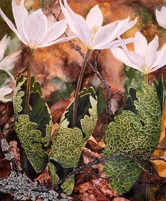 Puccoon Art Print by Thomas Akers