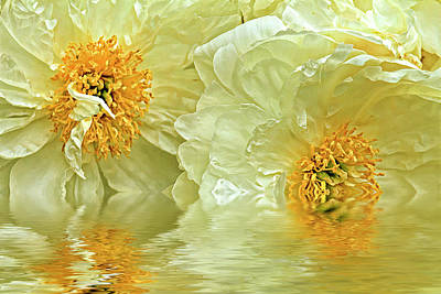 Animals Royalty-Free and Rights-Managed Images - Puddle of peonies by Geraldine Scull