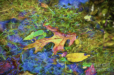 Autumn Leaf Photograph - Puddle Wonderful by Kerri Farley New River Nature