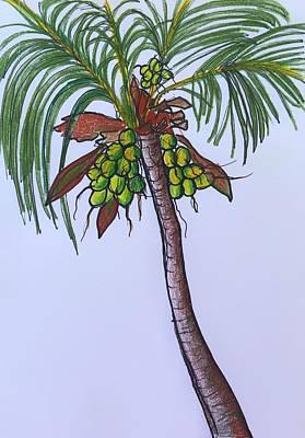 Photograph - Puerto Vallarta Palm by Renee Marie Martinez