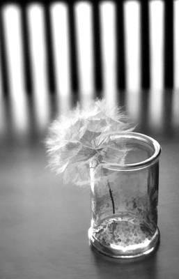 Photograph - Puff Ball by Diane Alexander