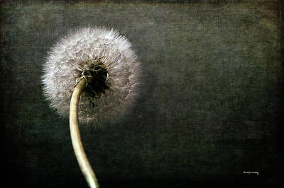 Photograph - Puff Make A Wish by Randi Grace Nilsberg