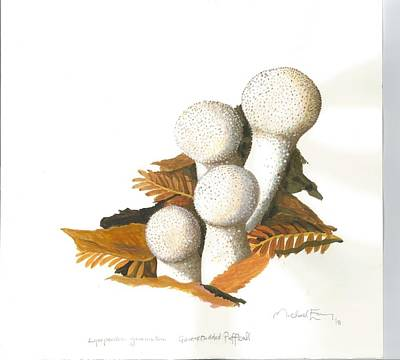 Painting - Puffball Mushroom by Michael Earney