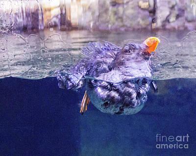 Photograph - Puffen 2 by Cheryl Del Toro