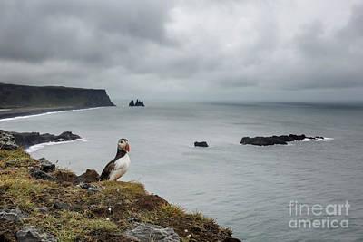 Photograph - Puffen by Gunnar Orn Arnason
