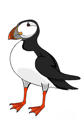 Drawing - Puffin by Alycia Christine