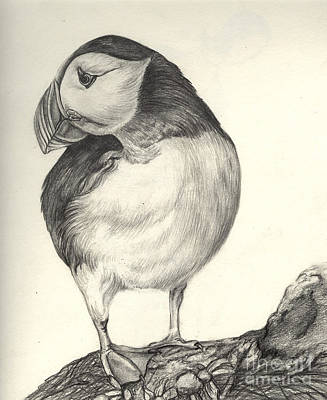 Puffin Print by Aurora Jenson