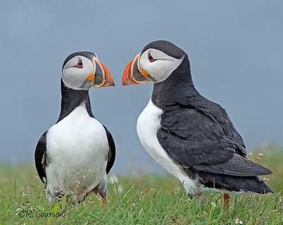 Photograph - Puffin Couple by CR  Courson