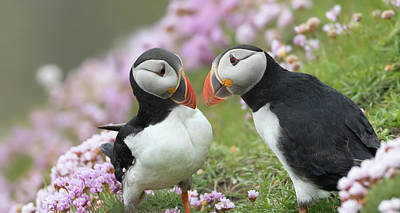 Photograph - Puffin Couple by Peter Walkden