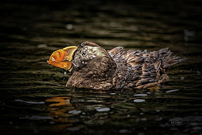 Photograph - Puffin Float by Bill Posner