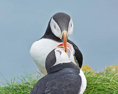 Photograph - Puffin Love by CR  Courson