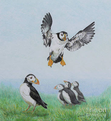 Puffin Drawing - Puffin Patrol By Elaine Jones by Elaine Jones