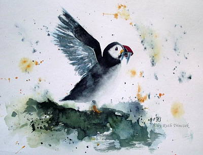 Painting - Puffin by Ruth Trinczek