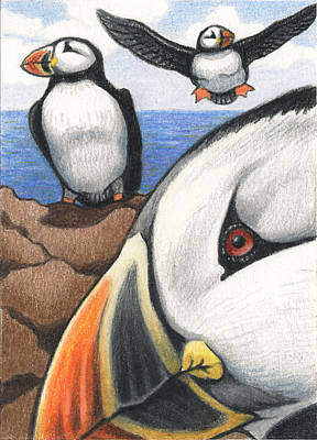 Puffin Drawing - Puffins by Amy S Turner
