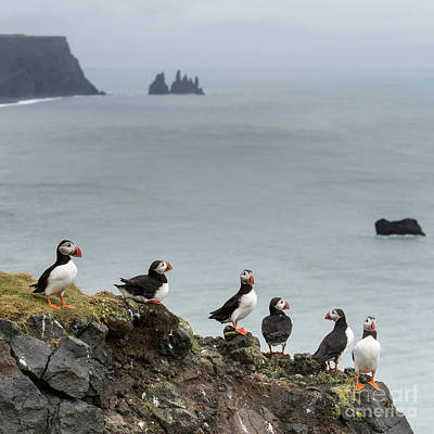 Photograph - Puffins At Beach by Gunnar Orn Arnason