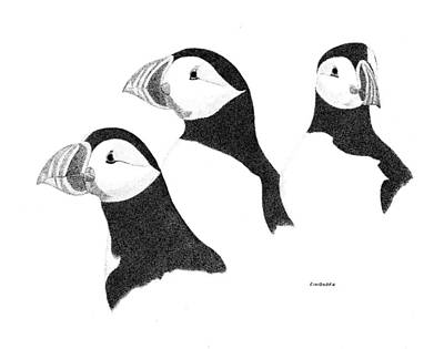 Puffin Drawing - Puffins by Ed Einboden