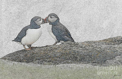 Digital Art - Puffins Kissing by Jim Hatch