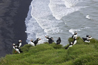Photograph - Puffins On The Edge by Michele Burgess