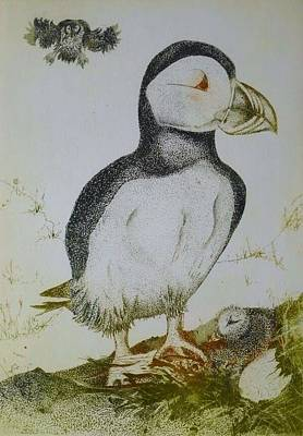 Puffin Drawing - Puffins by Tina Jost