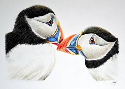 Puffin Drawing - Puffins Treshnish Isles Isle Of Mull Scotland by Aaron De la Haye